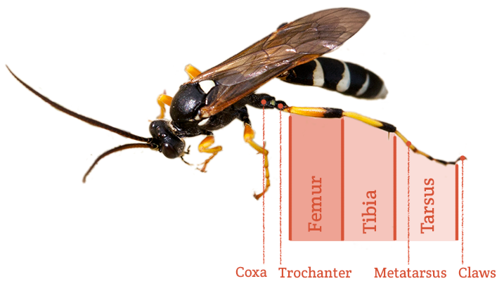 Anatomy of a bug